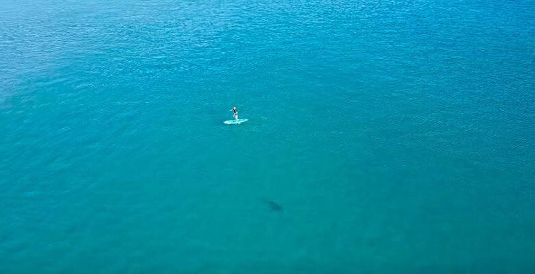 Drone flagra tubarão